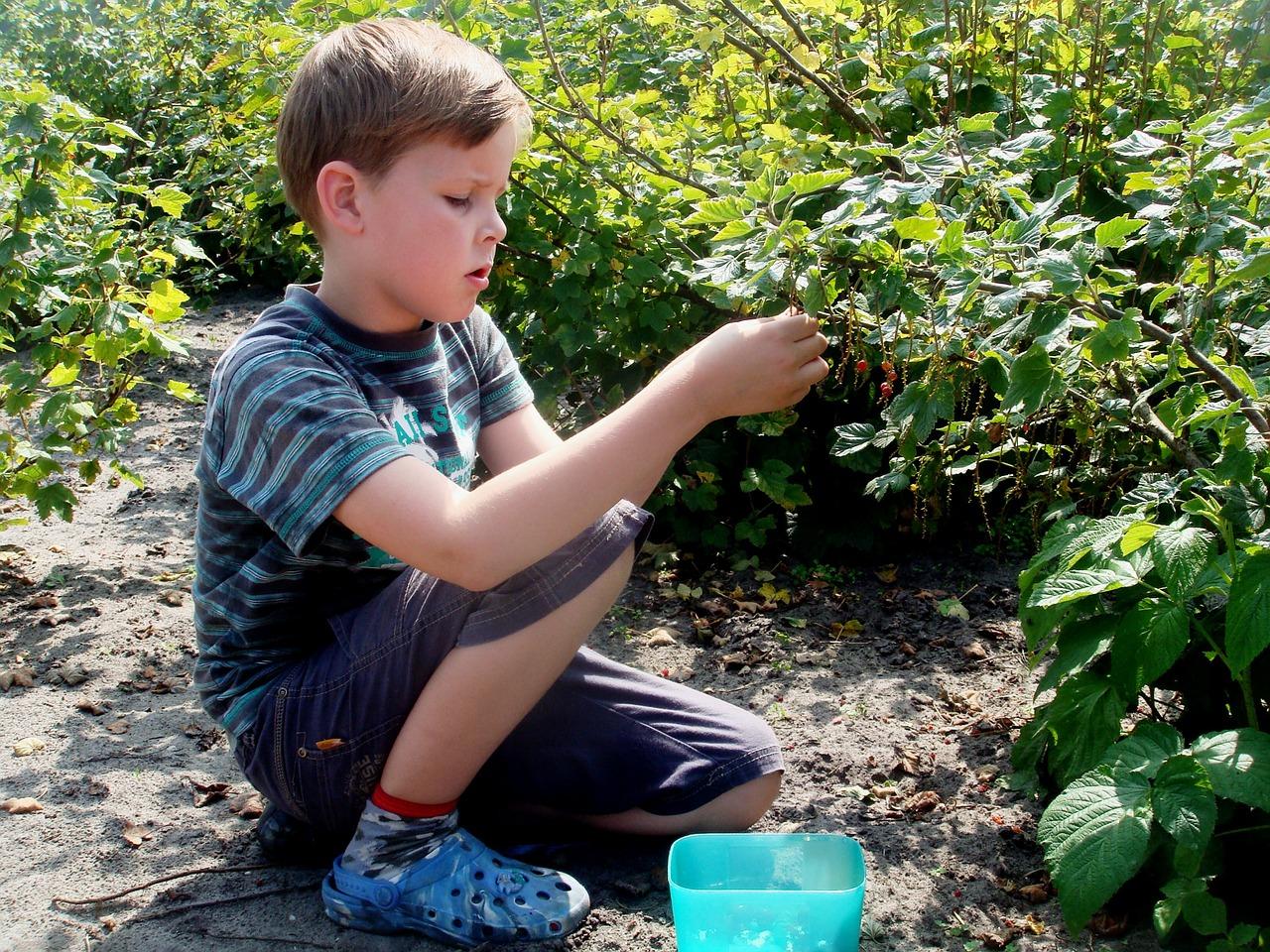Fruit plukken in de Wilde Weide tuin